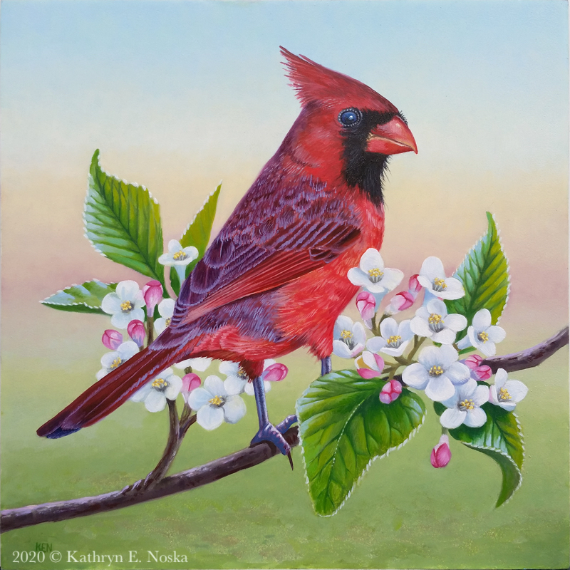 Cardinal and Viburnum Carlesii  6x6  SOLD